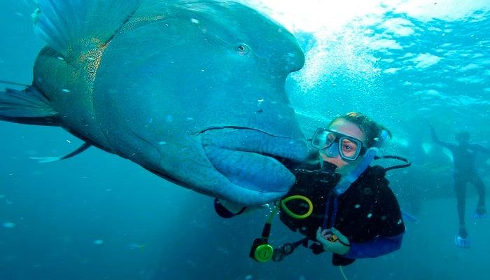 Denizaltı Biyologu