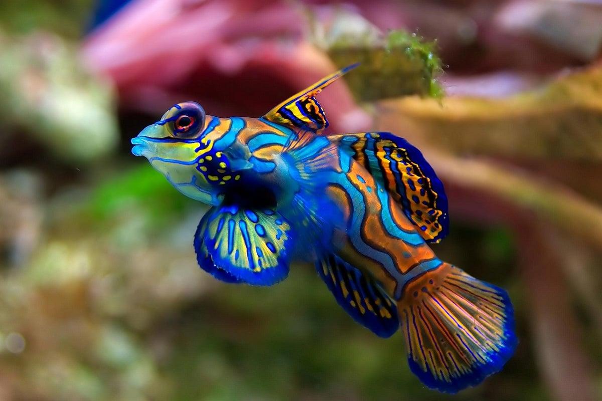 Dünyanın En Pahalı 10 Akvaryum Balığı