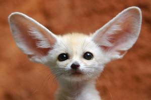 Dünyanın En Pahalı 10 Egzotik Hayvanı