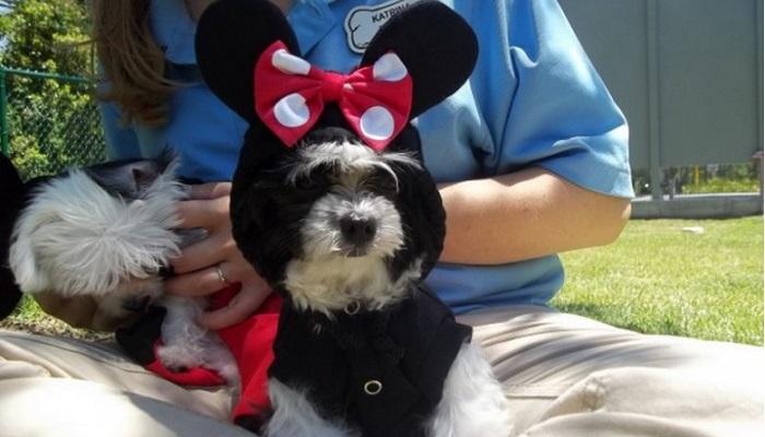 Best Friends Evcil Hayvan Bakım Evi - Disney World/Florida