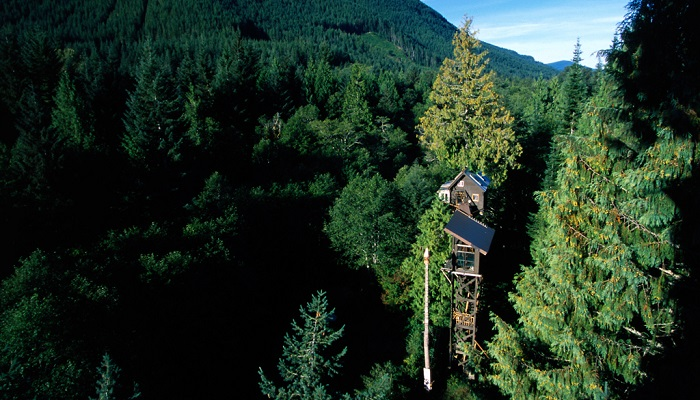 Cedar Creek Ağaç Evi - Washington