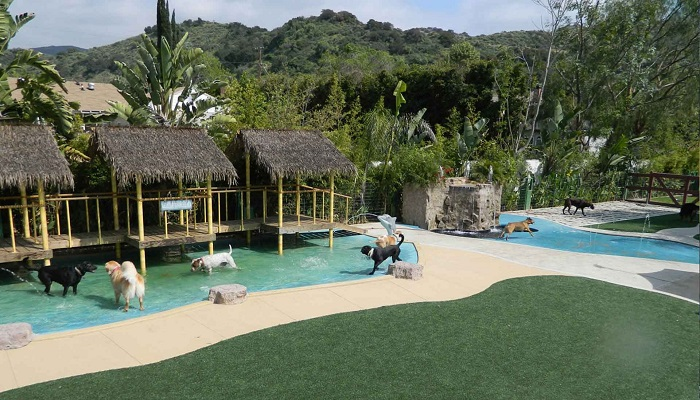 Paradise Ranch Evcil Hayvan Tatil Köyü - Los Angeles/Kaliforniya
