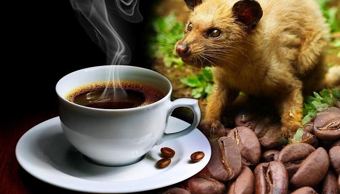 Kahve - Kopi Luwak