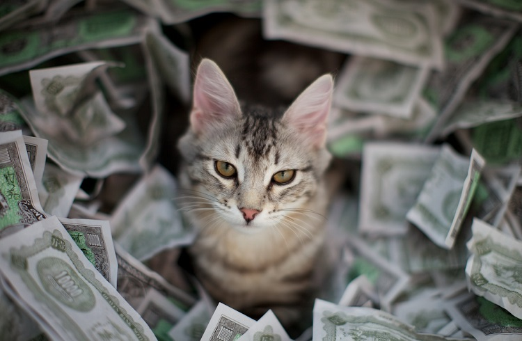 Dünyanın En Pahalı Kedi Cinsleri