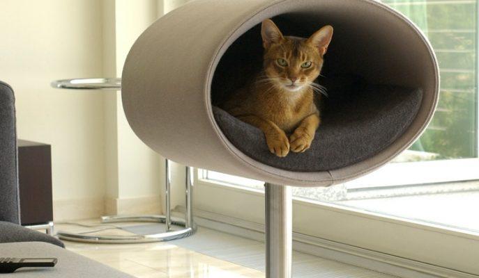 Dünyanın En Pahalı ve İlginç Kedi Evleri
