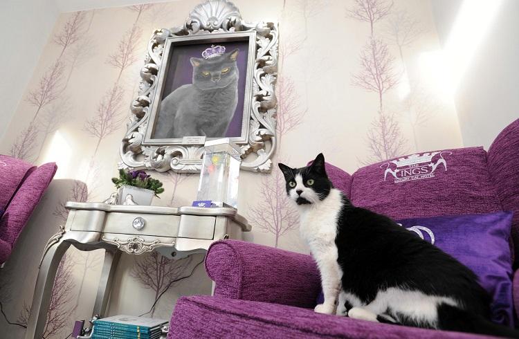 "Yorkshire'de Hizmete Giren Lüks Kedi Oteli: ""The Ings Luxury Cat Hotel"""