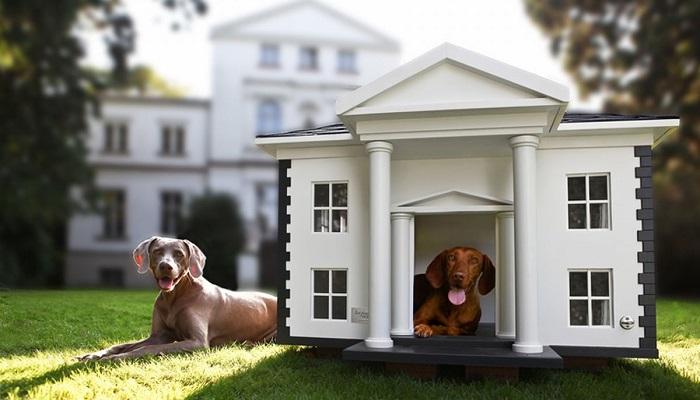Süper Köpek Evi