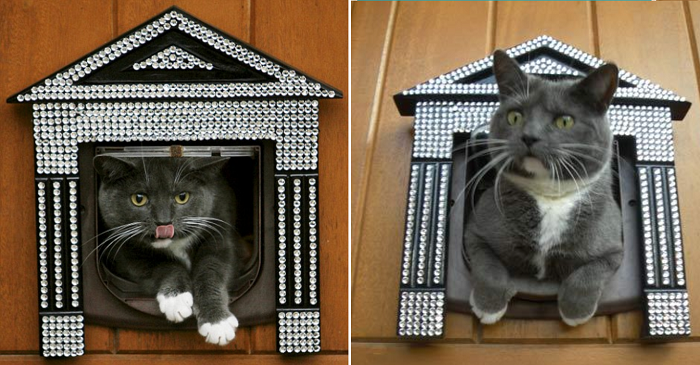 Swarovski Taşlı Kedi Kapısı