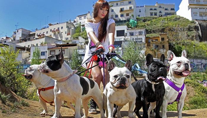 Köpek Bakıcısı