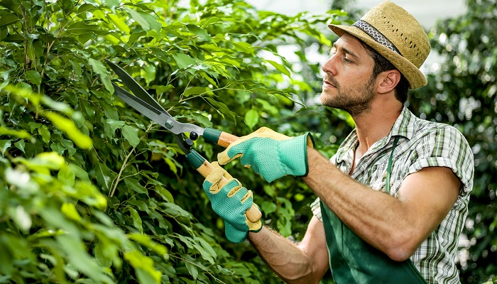 Bahçıvanlık