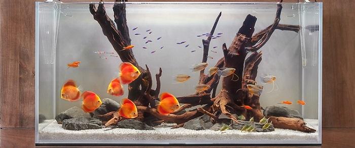 Kimler Akvaryum Balığı Yetiştiriciliği Yaparak Para Kazanabilir?