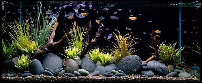 Akvaryum Balığı Yetiştiriciliği Yaparak Nasıl Para Kazanılır?