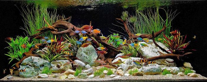Akvaryum Balığı Yetiştiriciliği Yaparak Ne Kadar Para Kazanılır?