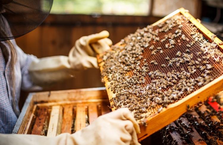 Arı Yetiştiriciliği (Arıcılık) Yaparak Para Kazanmak