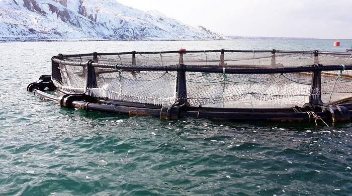 Balık Üretim Çiftliği Kurarken Hangi Yöntemler İzlenir?