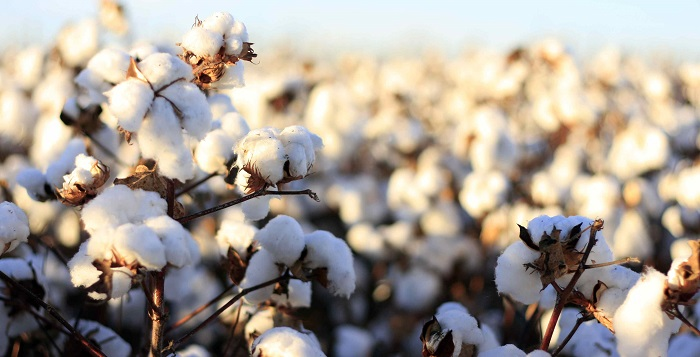 Mire kell vigyázni a pamut textíliák használatakor?