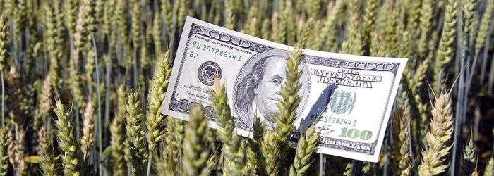 Borsa Piyasasında Buğday Yatırımı Nasıl Yapılır?