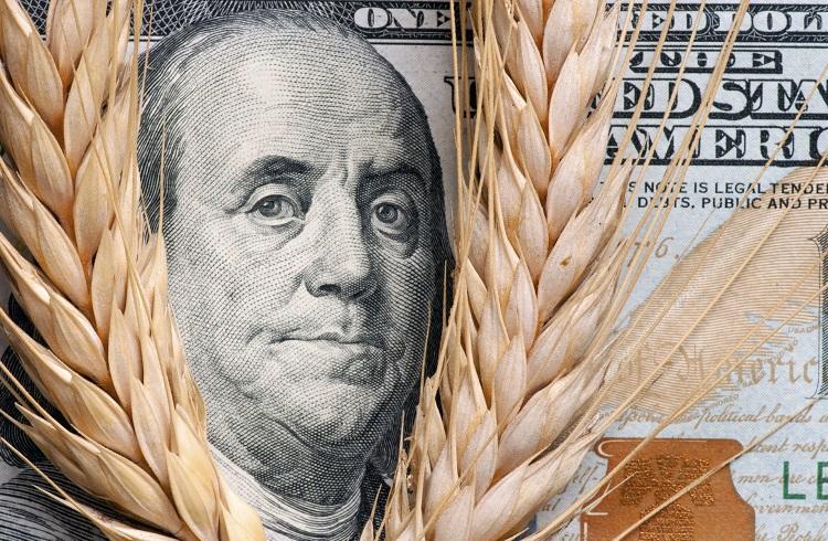 Buğday Yatırımı Nasıl Yapılır?