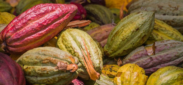 Forex Piyasasında Kakao Yatırımı Nasıl Yapılır?
