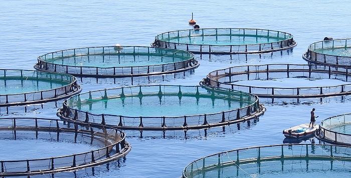Kimler Balık Üretim Çiftliği Kurarak Para Kazanabilir?