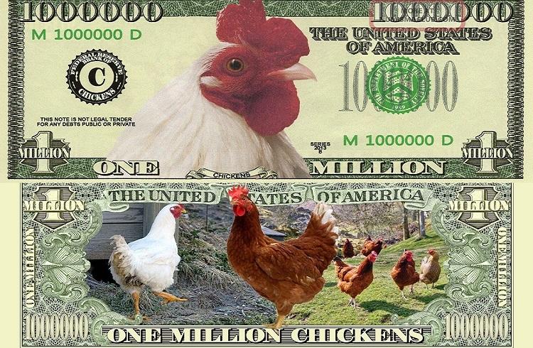 Tavuk ve Hindi Yetiştiriciliği Yaparak Para Kazanmak