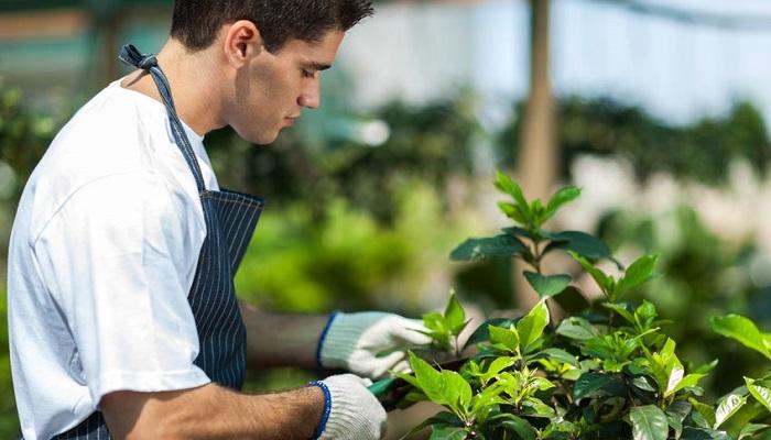 Bahçıvanlık Yaparak Para Kazanmak için Hangi Yöntemler İzlenir?