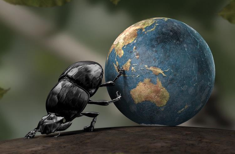 Böcek Yetiştiriciliği Yaparak Para Kazanmak