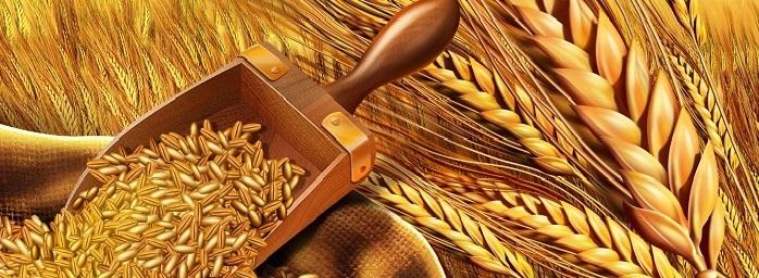 Forex ile Buğday İşlemleri