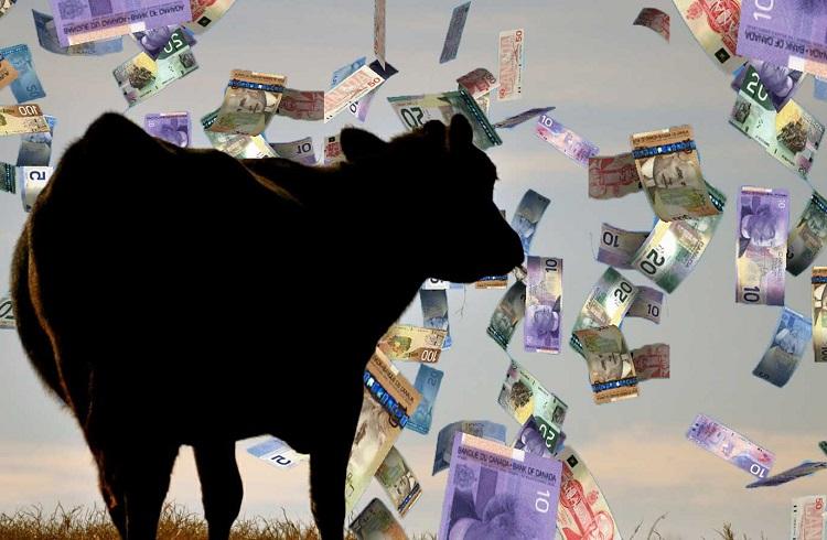 Büyükbaş Hayvan Yetiştiriciliği Yaparak Para Kazanmak