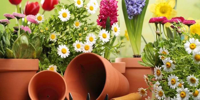 Çiçek Bakımı Yaparak Para Kazanmak