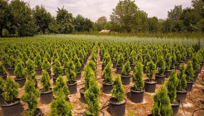 Dış Mekan (Park-Bahçe) Süs Bitkisi Yetiştiriciliği Yaparak Para Kazanmak