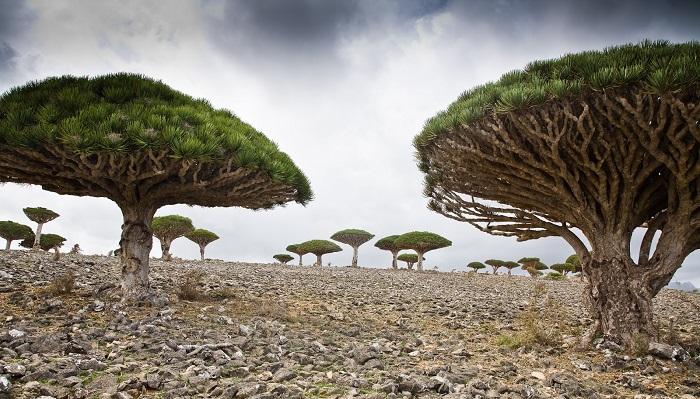 Sokotra Adası - Yemen