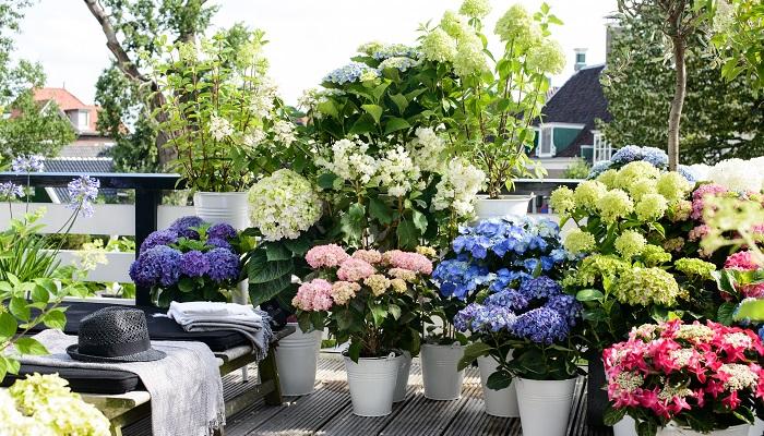 Evde Bitki Yetiştirerek Para Kazanmak