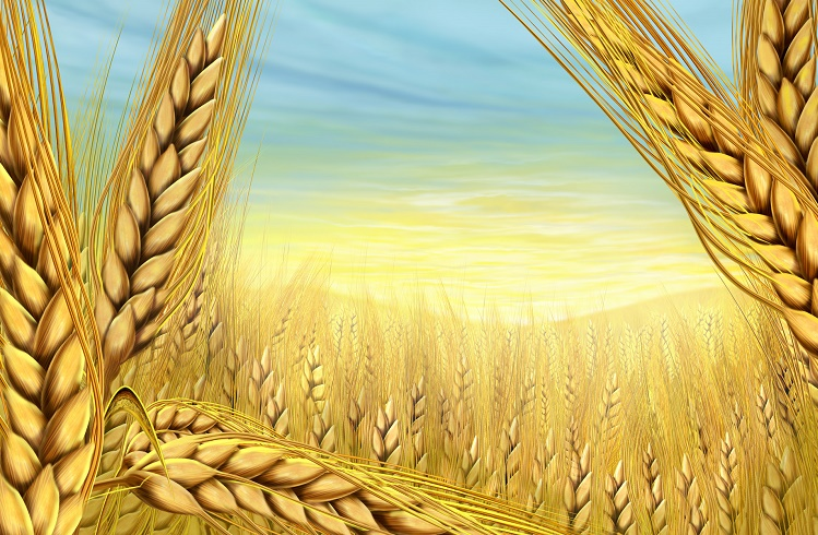 Forex Piyasasında Buğday İşlemleri