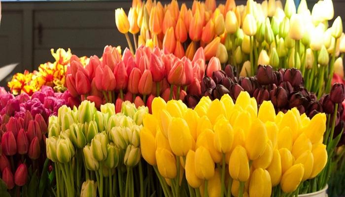 Kesme Çiçek Yetiştiriciliği Yaparak Para Kazanmak