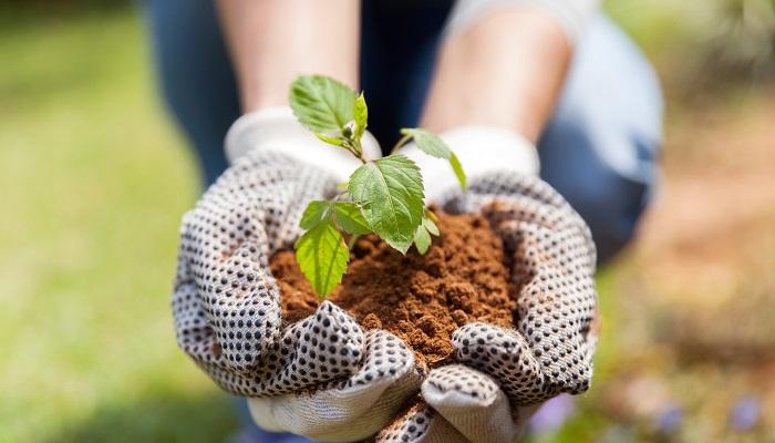 Kimler Bahçıvanlık Yaparak Para Kazanabilir?