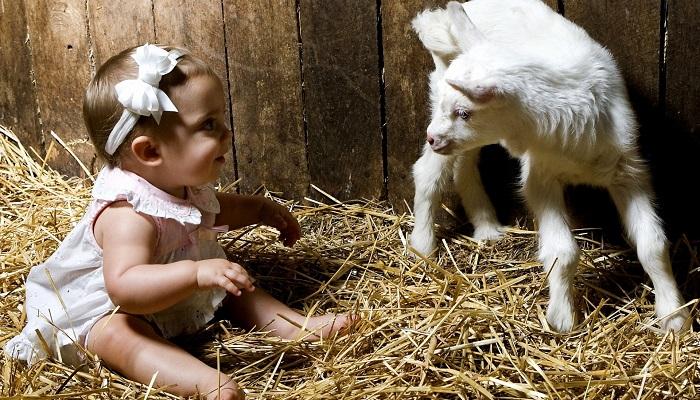 Kimler Küçükbaş Hayvan Yetiştiriciliği Yaparak Para Kazanabilir?
