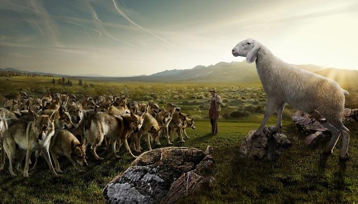 Koyun Yetiştiriciliği Yaparak Para Kazanmak