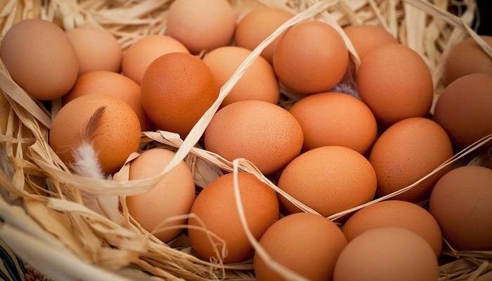 Organik Yumurta Üretimi Yaparak Para Kazanmak