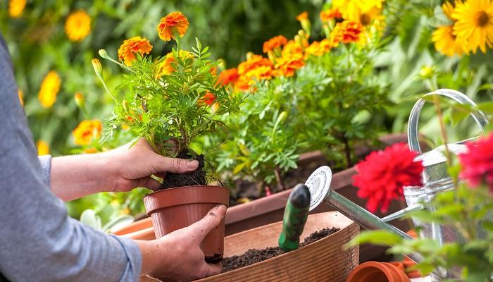 Süs Bitkisi Yetiştiriciliği Yaparak Para Kazanmak için Hangi Yöntemler İzlenir?