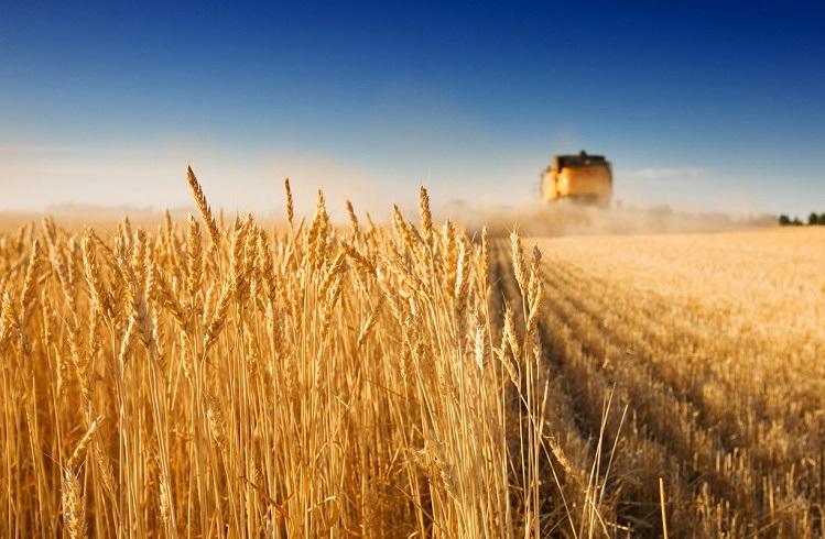 Tarımsal Emtialara Yatırım Yaparak Para Kazanmak