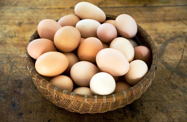 Yumurta Üretimi Yaparak Para Kazanmak