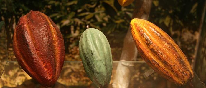Borsada Kakao Ticareti Nasıl Yapılır?