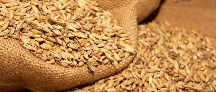 Buğday Yatırımı Yaparak Para Kazanmak için Hangi Yöntemler İzlenir?
