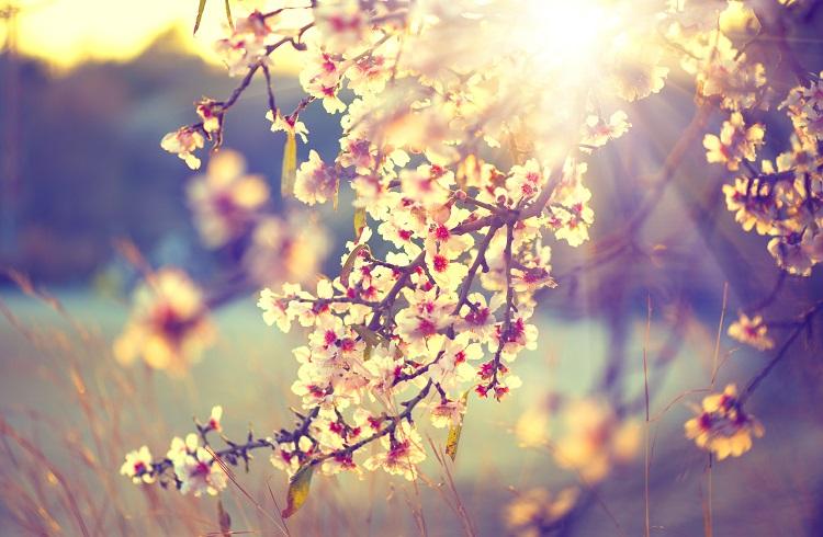Doğayla Birlikte Ruhunuza da Baharı Getirecek 9 Öneri