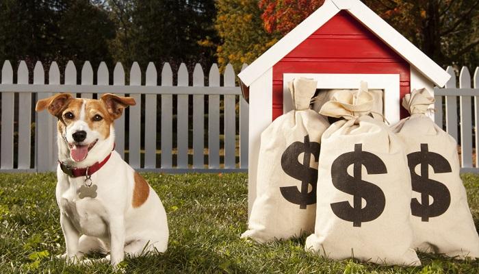 Evcil Hayvan Sektöründen Ne Kadar Para Kazanılır?