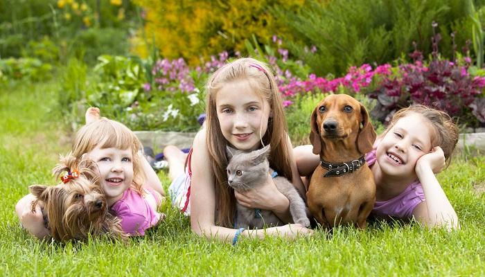 Evcil Hayvan Sektöründen Para Kazanmak İçin Hangi Yöntemler İzlenir?