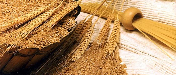 Kimler Buğday Yatırımı Yaparak Para Kazanır?