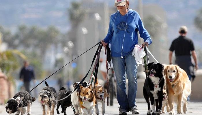 Köpek Gezdiriciliği Yaparak Para Kazanmak