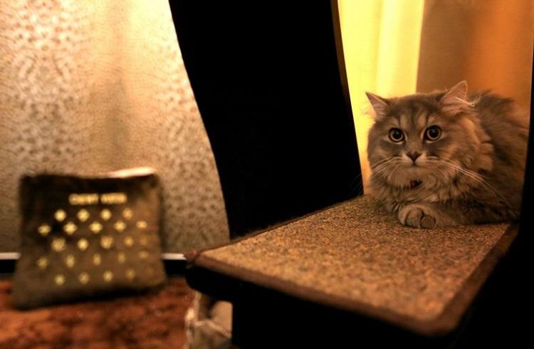 """Singapur'da Bulunan Beş Yıldızlı Kedi Oteli: """"Wagington"""""""